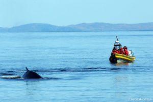 baleine-quebec